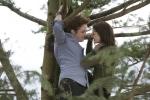 Ed e Bella sull'albero