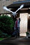 Deathly Hallows - Harry e Edvige